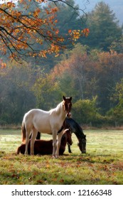 Three horses on a fall day with a mist in the air and a soft focus filter used to enhance the mood.