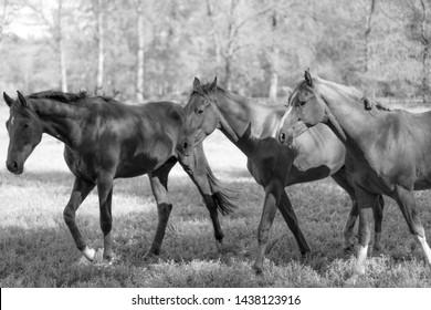 Three horses on a field