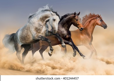 Three horses run gallop in desert dust