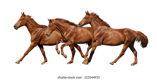 Three horses running fast isolated on white background