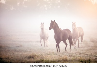 three horses running in the fog