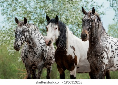Three horses standing together in the blooming garden in summer