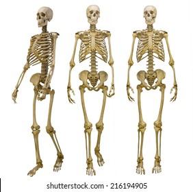 three human skeletons isolated on white background