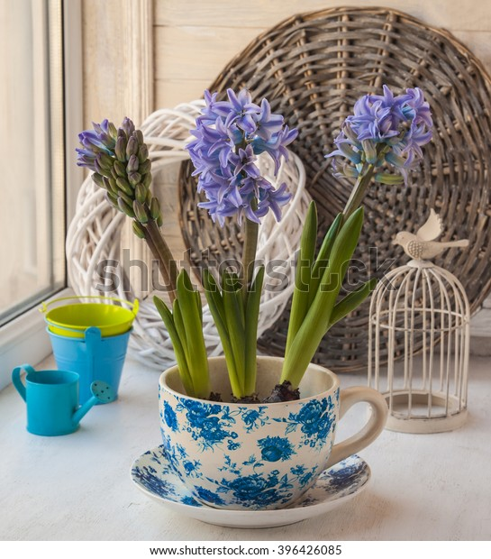 Three   hyacinth in a vintage pot next to a decorative cell in the window