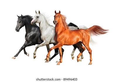 three isolated arabian horses