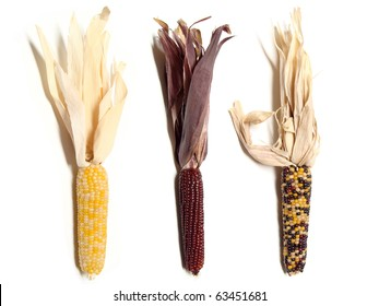 Three isolated colorful thanksgiving corn husks