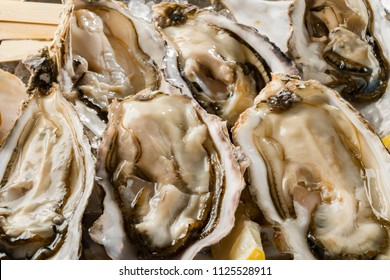 Three kinds of fresh and tasty oysters