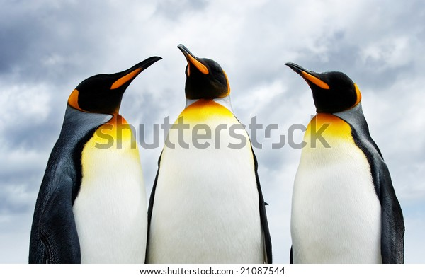 Three King Penguins at Volunteer Point