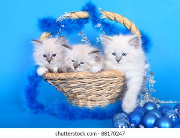 Three kittens in a basket with Christmas ornaments on a blue background.