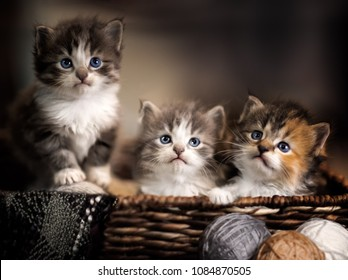Three kittens in a basket closeup