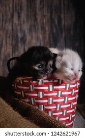 Three  kittens  in basket on wooden bacground