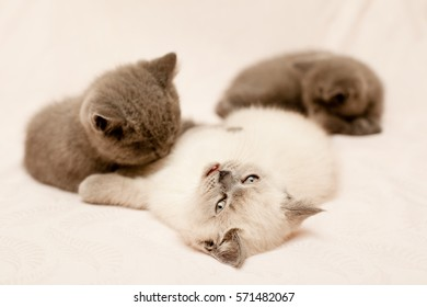Three kittens lying on pink background
