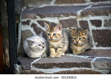 Three kittens, on grey stairs, outside. Cute. Adorable. Lovely. Friendship, community concept.