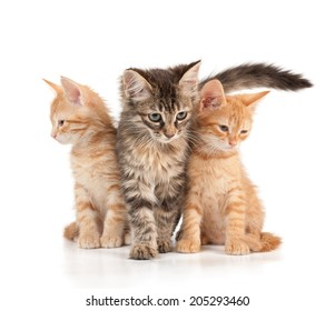 Three kittens on a white isolated background look in different directions