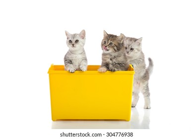 Three kittens playing in yellow box on white background isolated