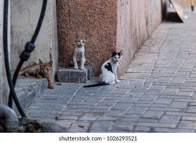 Three kittens rest in the shade in Manama, Bahrain.