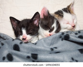 Three kittens sleeping tucked in a blanket with their heads together. Very sweet.