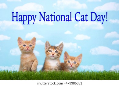 National Cat Day Images Stock Photos Vectors Shutterstock