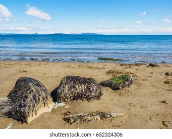 Three large rocks covered in seaweed on a sandy ocean beach