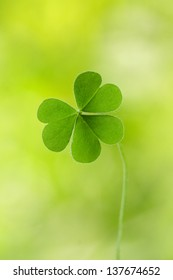Three leaf clover against green background