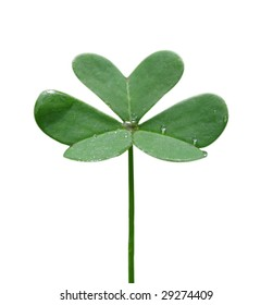 three leaf clover isolated on white background