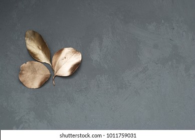 Three Leaves of Eucalyptus Plant in the Corner of Gray Cement Background