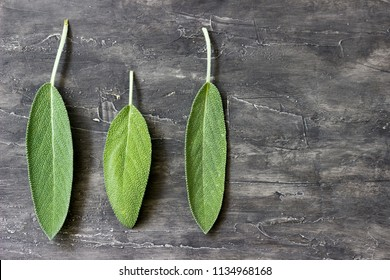 Three leaves of scented sage on a wooden background