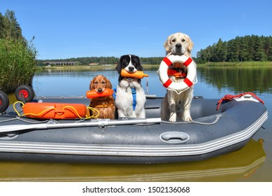 Three lifeguard dogs in the boat