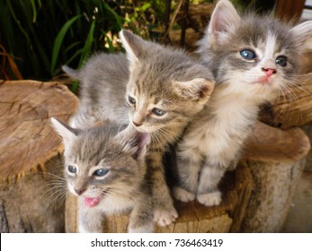 three little cats sit together