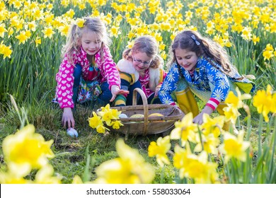 Three little girls are doing an easter egg hunt in a field of daffodils.