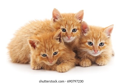 Three little kittens isolated on a white background.