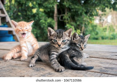Three little kittens on the wooden floor against green natural background