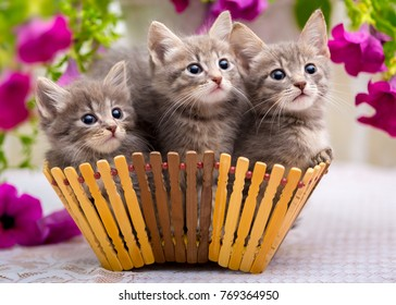 Three little kittens sitting in a basket with flowers