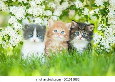 Three little kittens sitting near white flowers