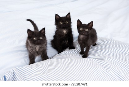 Three Little Kittens Sitting on Bed Together