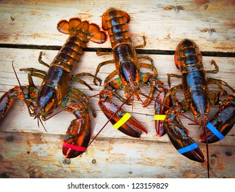 Three Lobsters