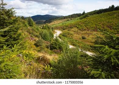 Three Lochs Forest Drive, Queen Elizabeth Forest Park, The Trossachs, Scotland, UK.