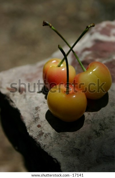 Three luscious yellow cherries arranged on a rock in the sunshine, provide a healthy alternative to junk food.