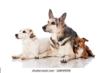Three mixed breed dogs isolated on white