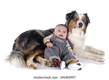 three months baby and australian shepherd in front of white background