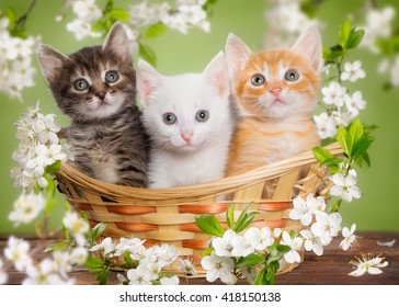 Three multi-colored kitten sitting in a basket surrounded by flowers