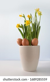 Three natural Easter eggs in a flower pot with yellow blooming daffodils (Narcissus) against a blue bright background with copy space, selected focus, narrow depth of field