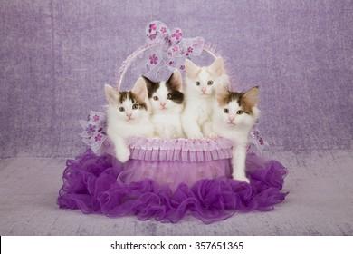 Three Norwegian Forest Cat kittens sitting inside purple tutu decorated basket on light purple background