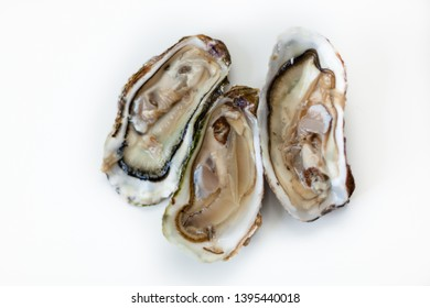 Three open Oysters on a white Table - Top-Shot, isolated