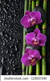 1000 Bambus Orchidee Pictures Royalty Free Images Stock Photos