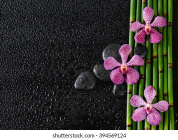 Three orchid with stones on bamboo grove-wet background
