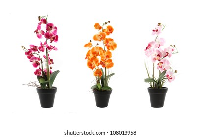 three orchids on pots