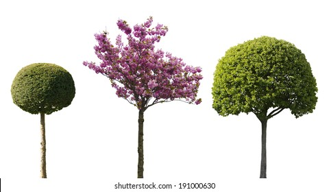 three ornamental trees isolated on white background