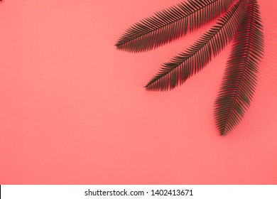 Three palm leaves on coral background