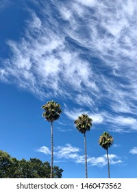 Three palm trees and clouds in blue sky